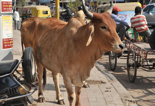 india2012-11_0